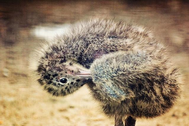 The Gulls Baby