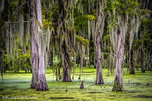 usa tree us flora nikon louisiana pantano swamp árbol nikkor wetland d4 humedal maurepas livingstonparish headofisland 70200mmf28gvrii 201207216506