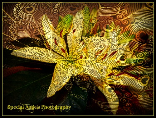 something different from me--abstract and texture done in ribbet...these were my yellow lilys | by Tumbleweed Photography~Carol~