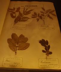 2012 0315 richard moritz schomburgk material in Botany Museum Adelaide (5)