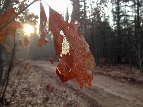 road trees sun nature sunrise leaf bokeh iphone 645pro