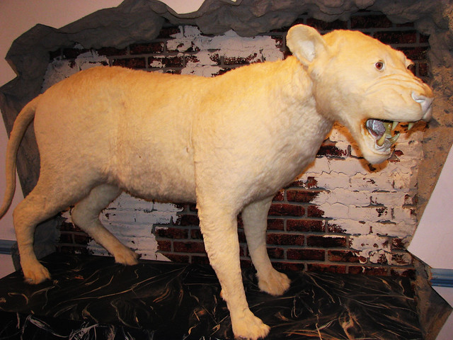Ripley's Believe It or Not! Museum and 4D Theater - Williamsburg, Virginia