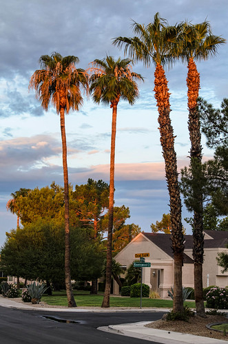 arizona palmtrees sunrisesunset suncitywest d5100