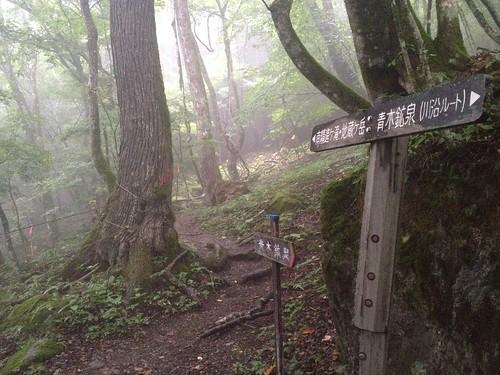 鳳凰山 ドンドコ沢 登山道   by ichitakabridge