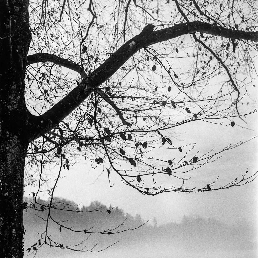 A walk in the winter wonderland VIII