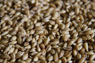 Germination orge malt | by delicesdinities