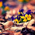 Flowers of Winter