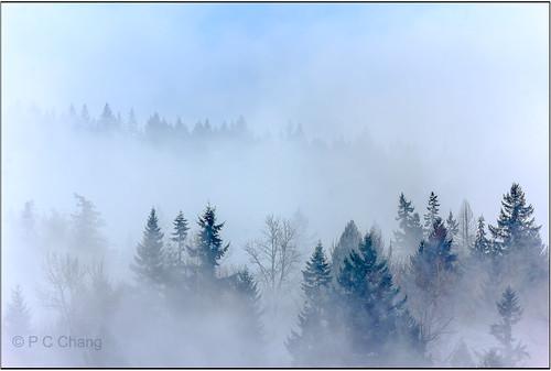 winter mist mountain tree fall nature fog clouds forest sunrise canon garden season landscape woods evergreen valley cascade cloudscape raincloud cascademountains duglasfir pcchang rememberthatmomentlevel1 rememberthatmomentlevel2 rememberthatmomentlevel3 dougfirforest