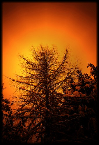 winter tree january pinhole evergreens me2youphotographylevel1