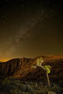 Joshua Tree at Keys View | by tltichy