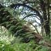 2012-11-23 Thailand Day 05, Doi Inthanon National Park, Ang Ka Nature Trail