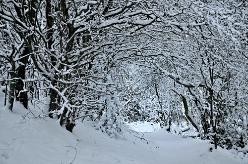 Winter visions | by Rising Damp