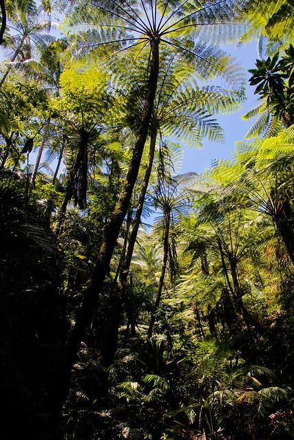 Pacific jungle
