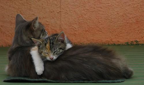 Abrazo de gato | by Roberto Bonvallet