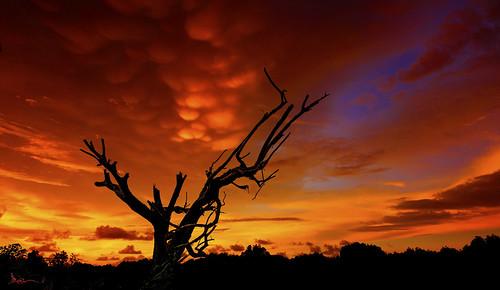 sunset night sunrise golden colorful cloudy sony north iso serenity borneo summit moment crocker sonycamera cpl a77 crockerrange kokol sabahsunset slta77v sabahresort