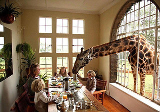 Giraffe Manor Lodge in Kenya   by Hase don