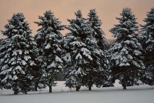 trees winter snow nikon centralpa d7000