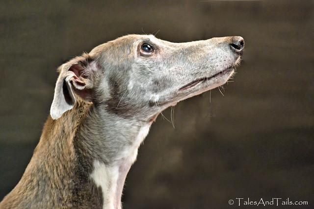 Fifty Shades of Greyhound (Explored)