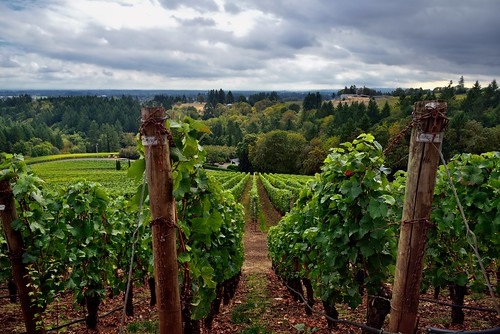 americanviticulturalarea archerysummitwinery capturenx2edited cloudyskies colorefexpro countryside day2 hillsideoftrees hillsides lookingsouth nature nikond800e portfolio post project365 rowsofvineyards trees triptomountrainierandcolumbiarivergorge vineyards willamettevalley willamettevalleyava or unitedstates flickrdiamond