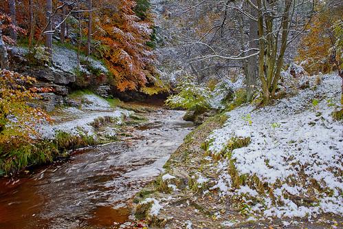 winter snow cold forest canon river landscape stream frost beck ngc northeast snowscape countydurham winterscene hamsterleyforest abigfave hairygitselite