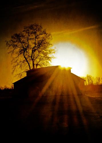 tree barn sunrise louisiana