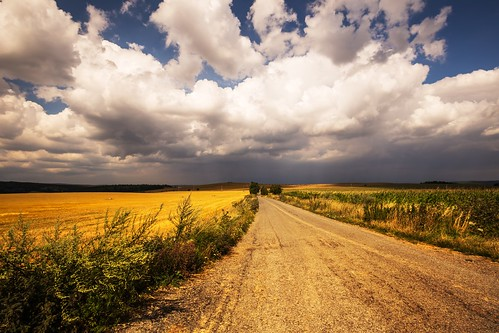 road dense moravian summer sky season scenic scenery rural plant outdoor nature landscape land idyllic horizon green grass forest field farm evening environment day countryside country clouds cloud beauty beautiful background agriculture