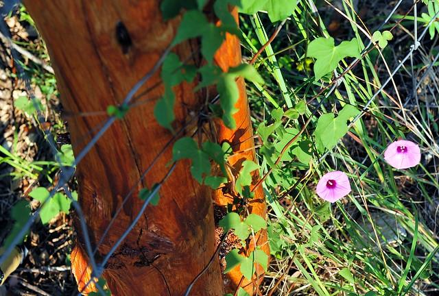 DSC_3974e ~ Along The Fence Line