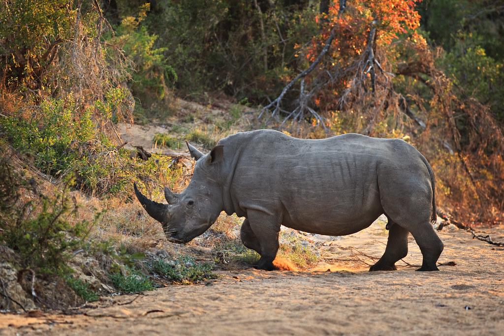 Image: Rhino River Crossing