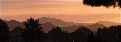 california trees sunrise sandiego hills ribbet