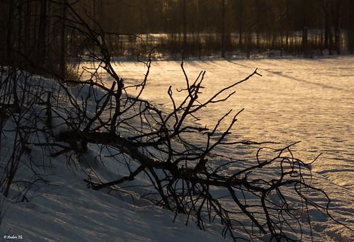 sunset snow tree örebro adolfsberg sony70300g sonyalphaslta77 sonyalphadslra77