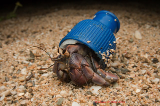 Pop top cap -  Crabs with beach trash hats