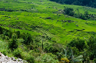 Sulawesi rice paddies terraces | by Jerome Nicolas