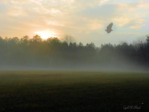 "bird fog landscape photo soe autofocus thegalaxy ""nikonflickraward"" gailpiland crazygeniuses ringexcellence flickrstruereflection1 rememberthatmomentlevel1 me2youphotographylevel1 rememberthatmomentl1"