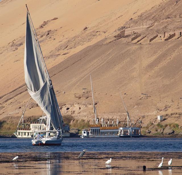River Nile - Boats and Bird Life - Aswan