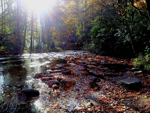 trees light sun sunlight nature water woodland landscape outdoors october scenery stream quiet scenic greatsmokymountainsnationalpark