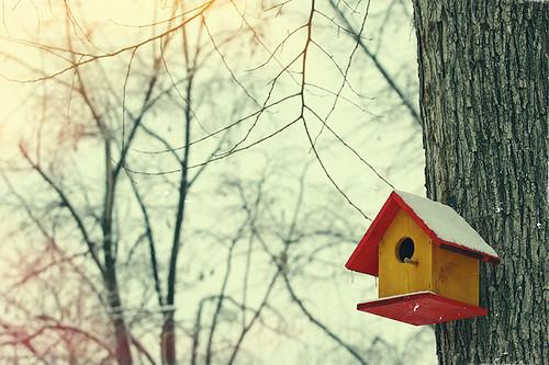winter tree canon birdhouse romania nestbox canonef70200mmf28lusm mogosoaia muntenia canoneos50d canon50d ilfov