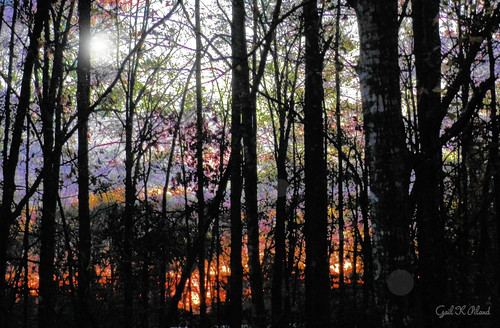 light forest photoshop sunrise landscape woods hypothetical thegalaxy flickraward sharingart gailpiland ringexcellence rememberthatmomentlevel1 rememberthatmomentl1