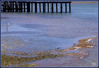 Corinella pier at low tide, Bass Coast, Western Port Bay, Victoria.