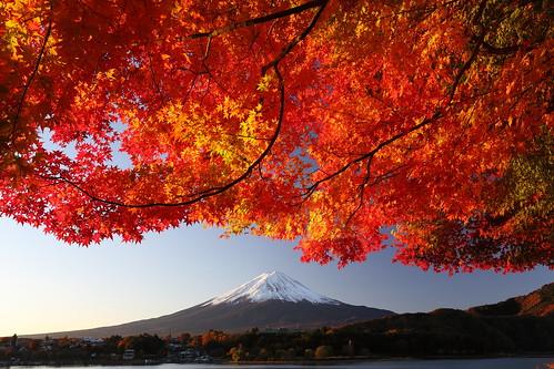 morning autumn mountain lake fuji kawaguchiko