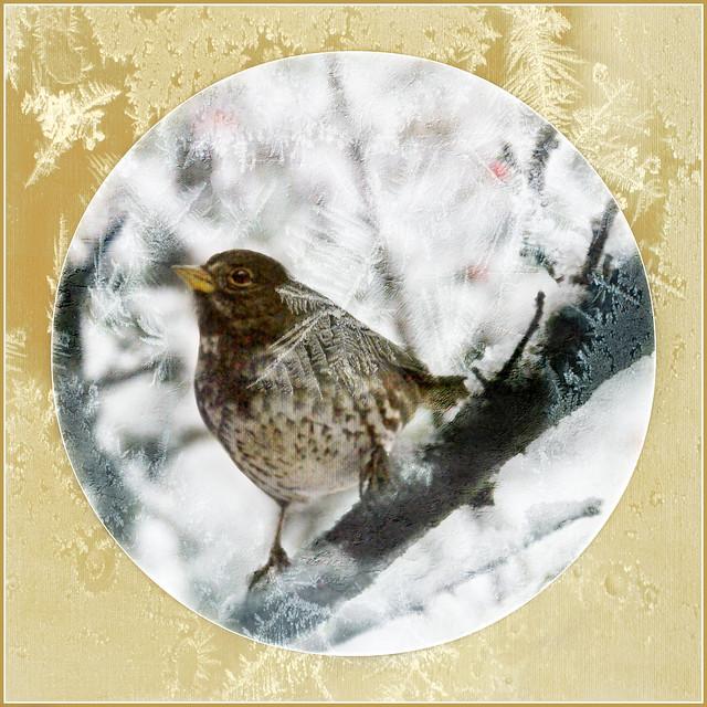 frosty feathery friend . . .