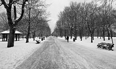 Regent's Park - London