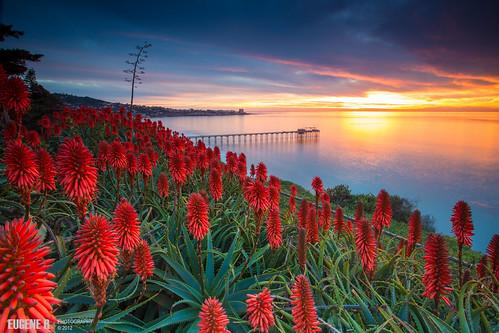 california sea seascape beach landscape sandiego lajolla scrippspier