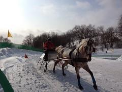 Sled Racing