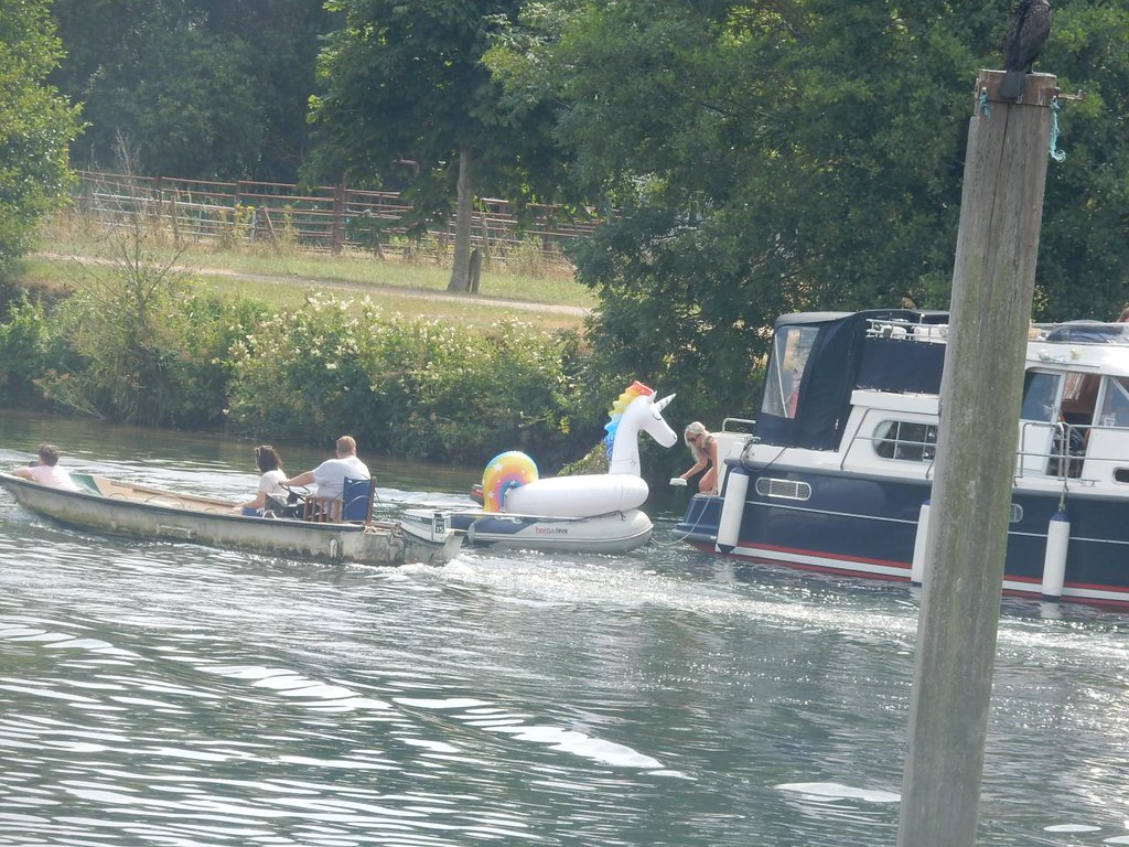 Unicorn (must be the heat) Hambleden Lock. Marlow Circular