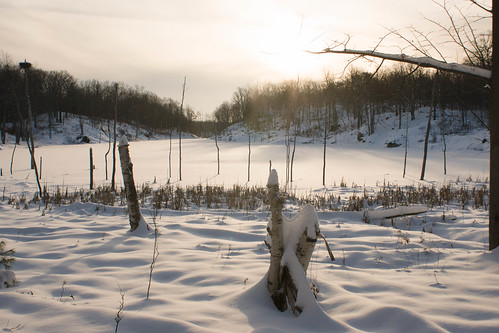 sunset snow swamp