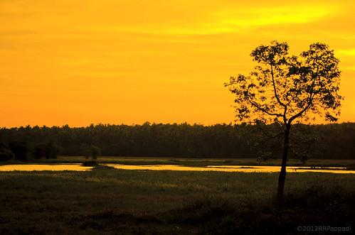 sky sun yellow sunrise photography dawn nikon kerala digitalcamera digitalphotography trichur yellowsky kunnamkulam d5100