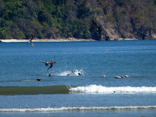 Refugio Biologica de Vida Silvestre Curu - pelikanen vissen