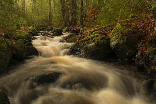 trees water leaves creek forest flow moss woods rocks stream sweden stones bushes halland mygearandme mygearandmepremium