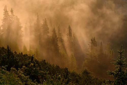 nikon d810 70200mm ceahlau massif mountain forest trees light fog mist morning nature natural outdoor romania europe outstandingromanianphotographers tree