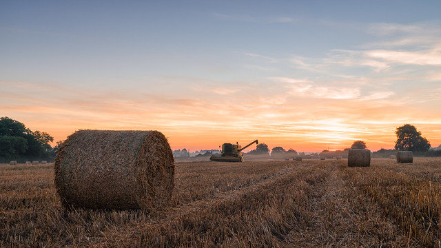 2016 Harvest - Harvest dawn